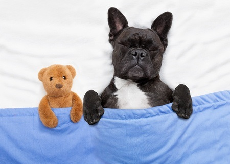 Dog Sleeping with Teddy Bear