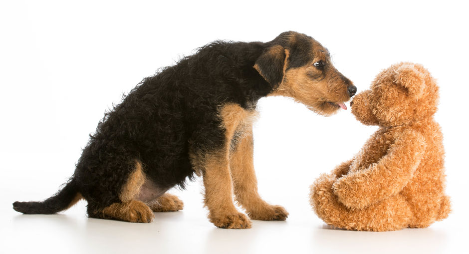 Why Do Pets Love Stuffed Animals?