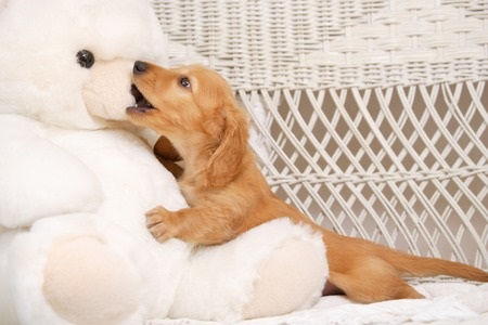 Puppy with a Teddy Bear