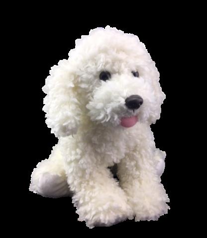 Scruffy White Puppy